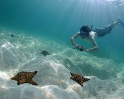 Perfect Summer Destination, Isla Saona, Dominican Republic, Diver and sea stars