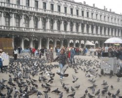 Pigeons Holiday, Venice, Italy, Piazza San Marco, Pigeon kicking