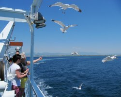 Seagull Holiday, Greece, Feeding seagulls2