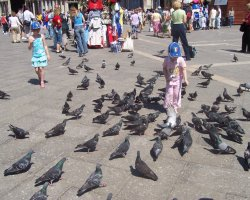 Pigeons Holiday, Venice, Italy, Piazza San Marco, Pigeon friendly