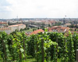 Famous Prague Restaurants, Prague, Czech Republic, Vineyards view from Villa Richter