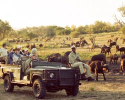 Safari Holiday, In the middle of the wilderness