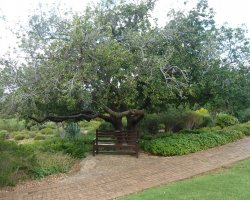 Kirstenbosch, South Africa, National Botanical Garden bench