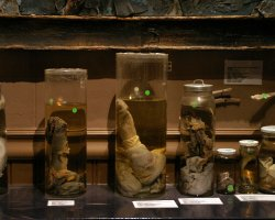 Strangest Museums, Phalluses Museum, Iceland, Exhibits