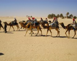 Tunisia, Africa, Camel ride