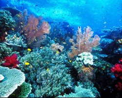 Underwater Tourism, Raja Ampat Islands Indonesia