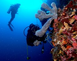 Underwater Tourism, Scuba divers viewing the coral reef