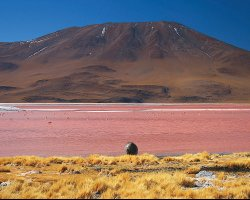 Nature Weirdness, Bolivia, Laguna Colorada overview