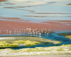 Nature Weirdness, Bolivia, Laguna Colorada and some Flamingos