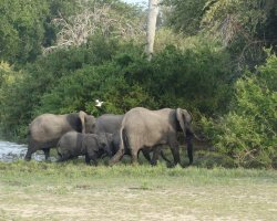 Wild Holiday, Selous, Tanzania, Elephant family