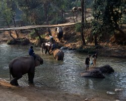 Wild Holiday, Chiang Mai, Thailand, Elephant bathing