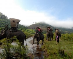 Wild Holiday, Hongsa, Laos, Riding elephants expedition