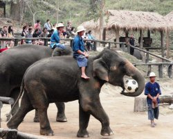 Wild Holiday, Chiang Mai, Thailand, Elephants playing football