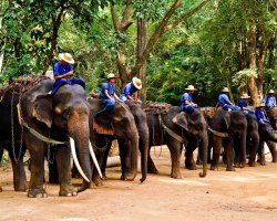 Wild Holiday, Chiang Mai, Thailand, Elephant camp