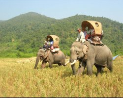 Wild Holiday, Hongsa, Laos, Riding elephants adventures