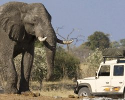 Wild Holiday, Chobe National Park, Botswana, Elephant close to expedition