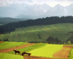 Tatra Mountains, Europe, Rolling Fields with mountains in background