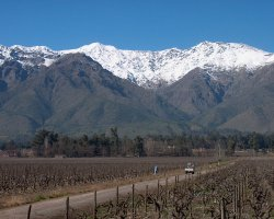 Valle del Maipo, Chile, Vineyards at spring