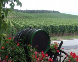 Mosel Valley, Germany, Europe, Vineyard tour
