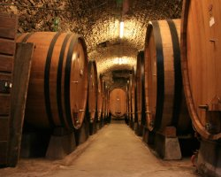 Tuscany, Italy, Europe, Wine cellar with oak barrels