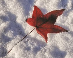 Winter Travel Holiday, Leaf on snow