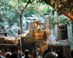 World Largest Hotels, MGM Grand, Las Vegas, Nevada, USA, Lion Habitat