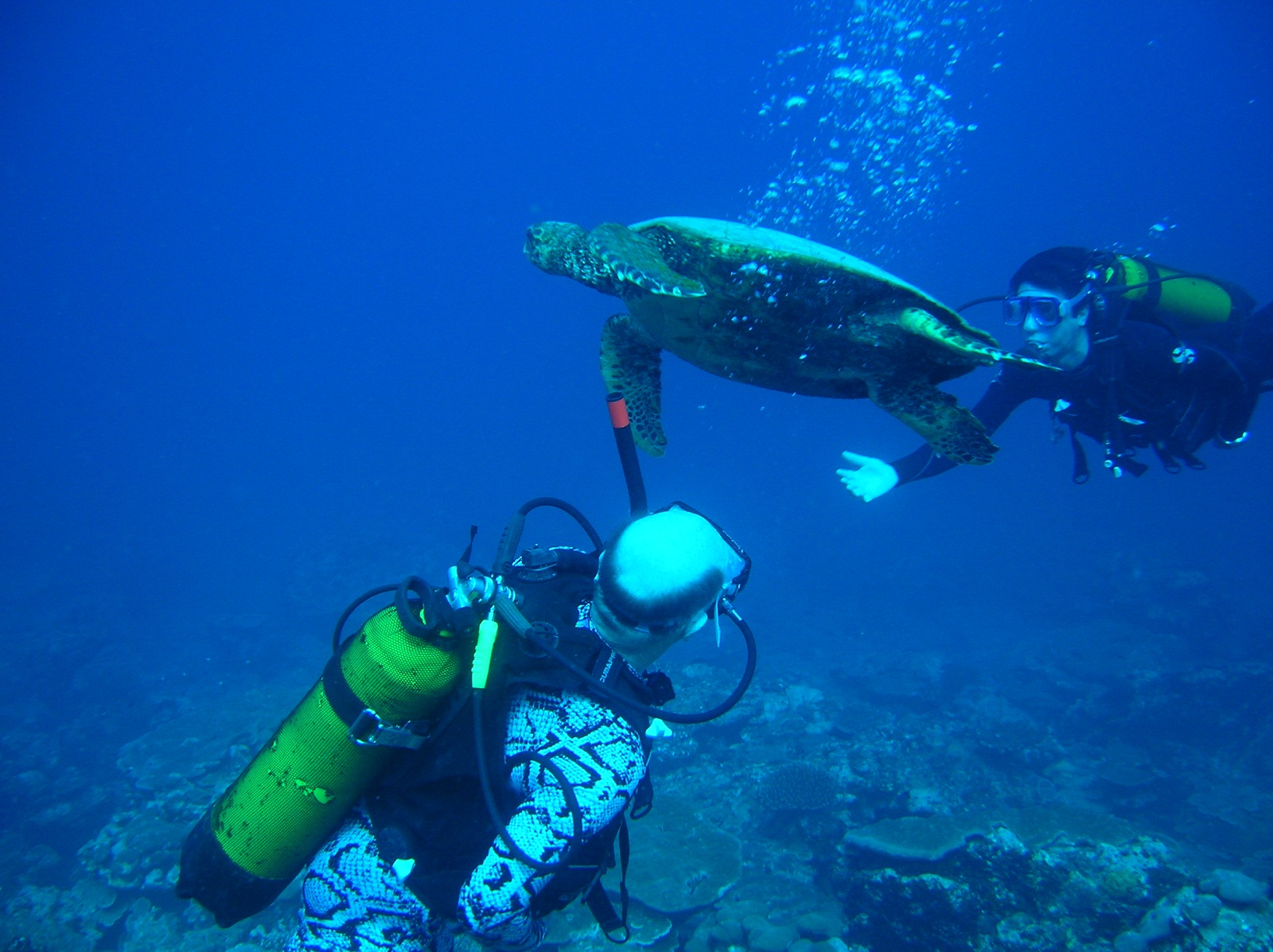 Underwater Tourism, Scuba divers at Kadmat