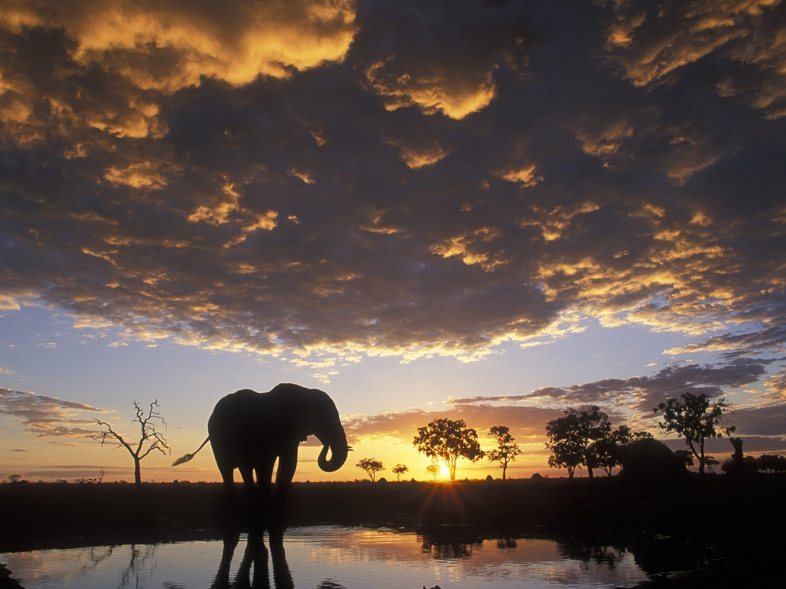 Wild Holiday, Chobe National Park, Botswana, Elephant silhouett at sunset