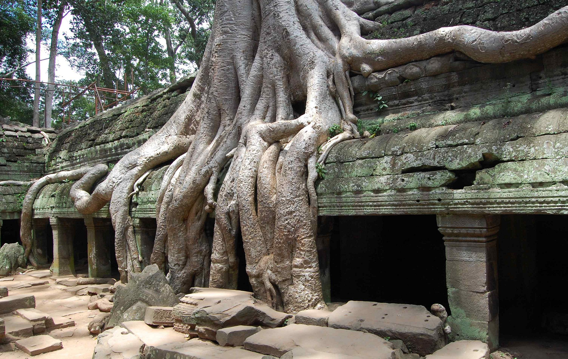 Ta Prohm, Angkor, Cambodia, Tree roots takes the temple