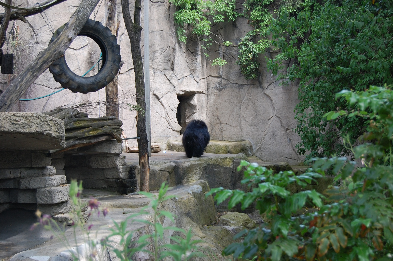 Frankfurt Zoo, Germany, Black bear (2)