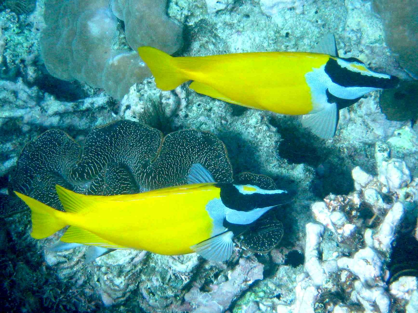 Pictures of the great barrier reef in australia images for Great barrier reef fish