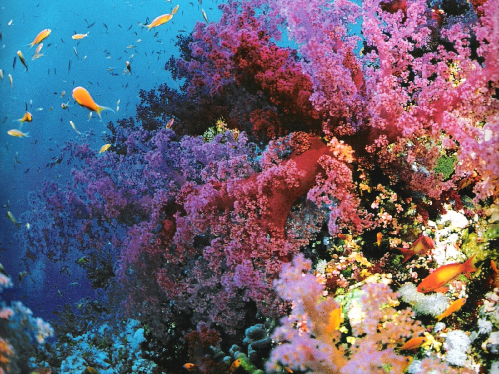 Great Barrier Reef, Australia, Corals and fish02