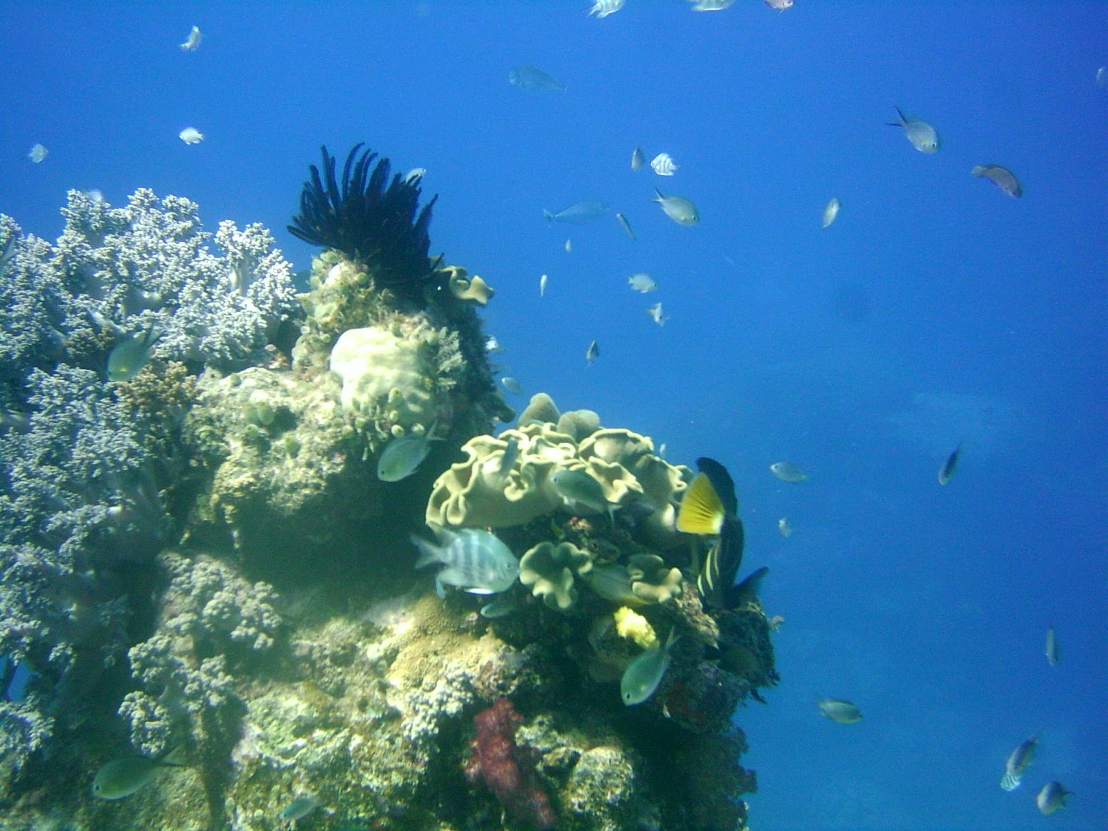 Great Barrier Reef Australia Corals And Fish 317