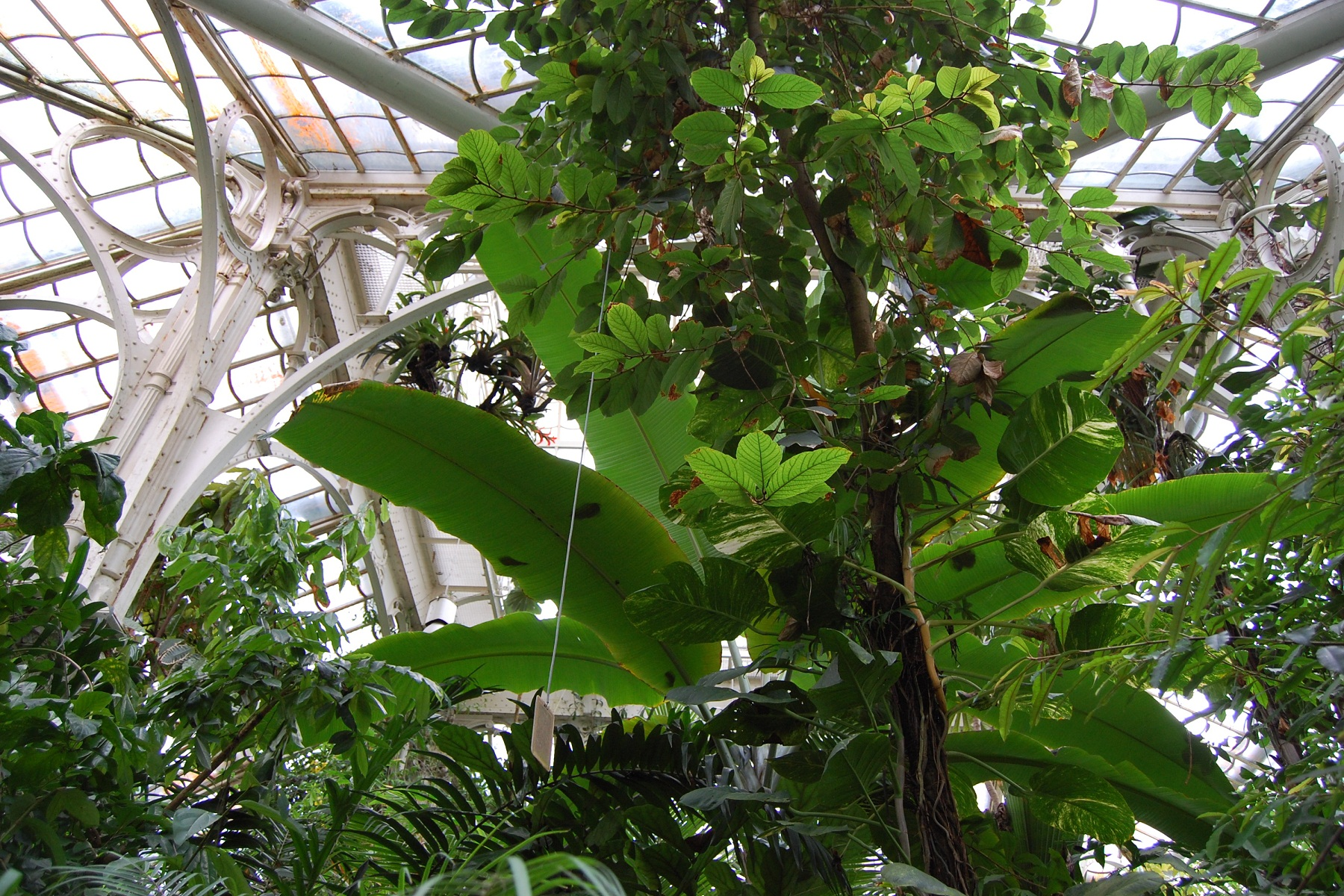 Vienna Schonbrunn Greenhouse, Austria, Veins on trees