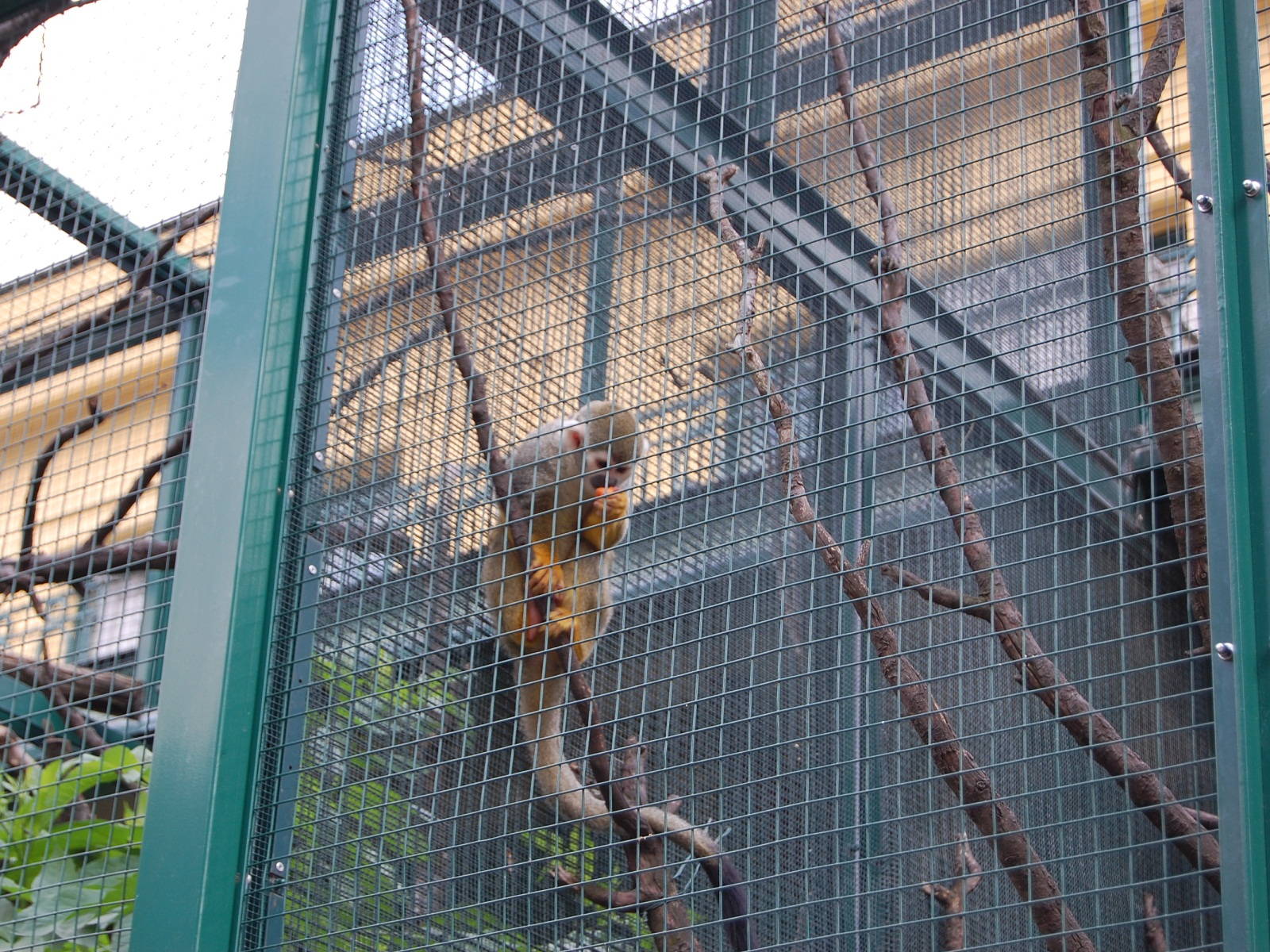 Vienna Schonbrunn Zoo, Austria, squirrel monkey