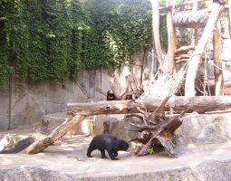 Frankfurt Zoo, Germany, Black bear