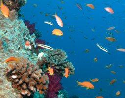 Great Barrier Reef, Australia, Corals and banks of fish