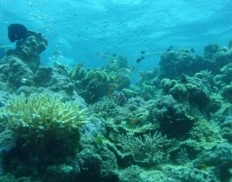 Great Barrier Reef, Australia, Corals and fish