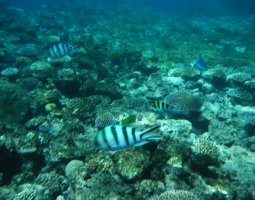 Great Barrier Reef, Australia, Corals and fish03