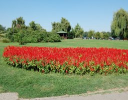 Herastrau Park, Bucharest, Romania, Red flowers arrangements