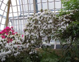 Vienna Schonbrunn Greenhouse, Austria, Flower shrubs