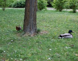 Vienna Schonbrunn Zoo, Austria, squirrel and duck
