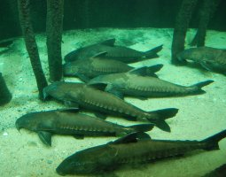 Vienna Schonbrunn Zoo, Austria, Aquarium, Catfish