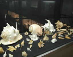Senckenberg Museum, Frankfurt, Germany, Snail shell exhibit