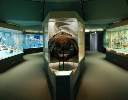 Senckenberg Museum, Frankfurt, Germany, Aquarium area