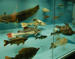 Senckenberg Museum, Frankfurt, Germany, Fishes exhibit