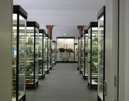 Senckenberg Museum, Frankfurt, Germany, Bird area
