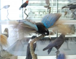 Senckenberg Museum, Frankfurt, Germany, Colorful bird