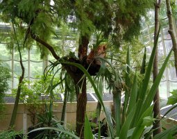 Vienna Schonbrunn Greenhouse, Austria, Water plants and trees